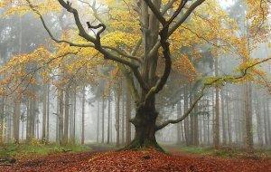 November landscape from myriammahiques.blogspot.com